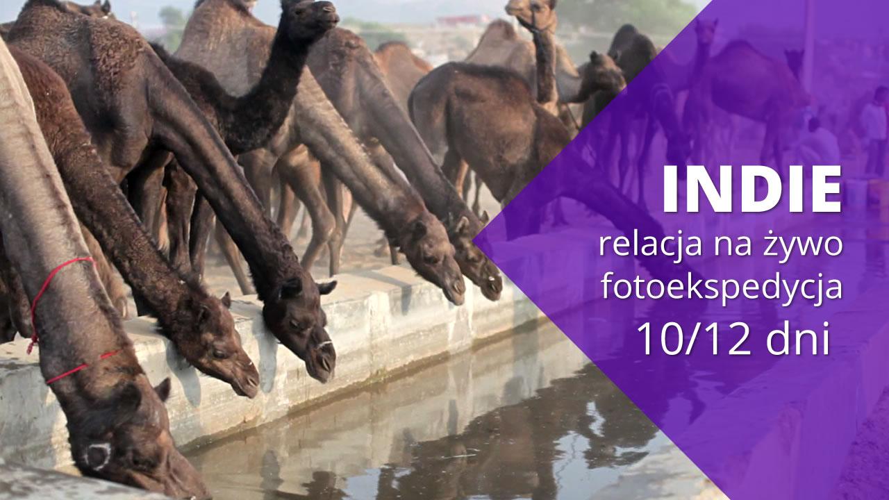 Fotoekspedycja do Indii #10 –  Pushkar, największy targ wielbłądów na świecie